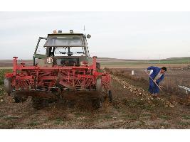 Solicitudes de la PAC: Los grandes cultivos evolucionan, con menos remolacha, trigo blando o alfalfa y más avena o colza