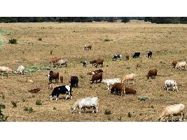Sequía en Alemania causa pérdidas de más de mil millones en el campo