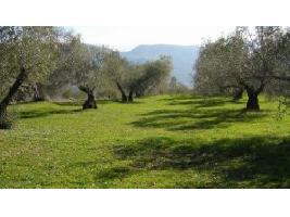 Andalucía defiende que el productor ecológico se considere 'per se' agricultor genuino en la nueva PAC