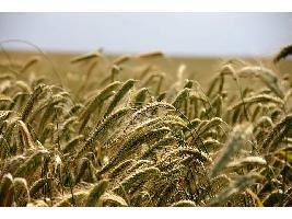Aragón convoca la línea de apoyo a acciones de cooperación para la innovación tecnológica en el sector agroalimentario.