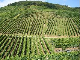 Bruselas recoge un listado de solicitudes de registro internacional de varias Indicaciones Geográficas (I.G.s) vitivinícolas