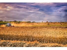 Campos demostrativos de cereal dentro de la iniciativa 'Grano Sostenible' para mostrar qué semilla utilizar en cada terreno