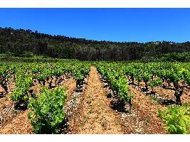 Castilla-La Mancha impulsa la transición digital en el sector vitivinícola. Un cambio que aumentará la trazabilidad y la garantía