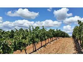 Cooperativas Agro-alimentarias Castilla-La Mancha solicita que se habiliten 6 millones de hectólitros para destilación de crisis