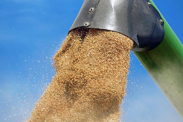Cooperativas estima que queda entre un 35 y un 40% de cereal por comercializar con las cotizaciones más elevadas de los últimos años.