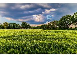 El Gobierno aprueba la distribución territorial provisional de 49,2 millones de euros para nueve líneas de actuaciones agrarias