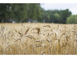 El Gobierno reactiva con las comunidades autónomas los protocolos para coordinar y preparar las campañas agrícolas.