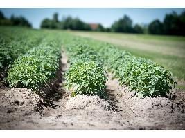 Eurocámara aprueba que agricultores sigan recibiendo ayudas en 2021 y 2022