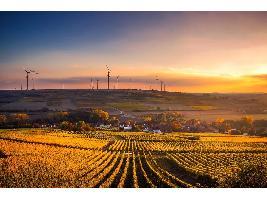 Futuro de la producción ecológica