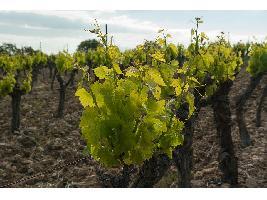 La Asociación de Bodegas Productoras de Vinos de la Tierra de Cádiz toma impulso para convertirse en un referente