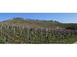 La producción de vino de la DO La Mancha se incrementa un 5,8% en 2020, con algo más de tinto que de blanco.