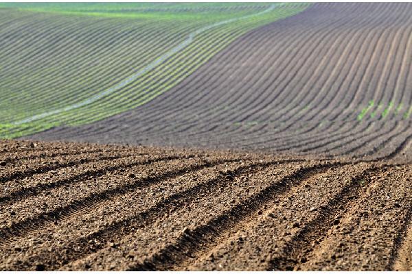 La superficie de cultivo se mantiene estable, con ligeras subidas en los cultivos leñosos