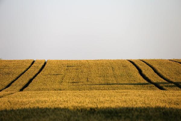 La UE aprueba el reglamento del programa ambiental LIFE, que puede recibir apoyo de la PAC y está dotado con 5.432 millones.