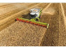 Los precios de los cereales se estancan con una subida leve del trigo duro y repeticiones en el resto