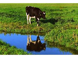 Los precios se presentan un año más como el caballo de batalla del sector agrícola y ganadero, que vuelve a poner la mirada en los jóvenes y la PAC.