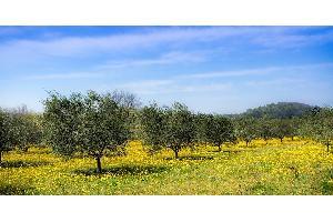 Luis Planas asegura que la nueva norma de calidad del aceite de oliva beneficiará a productores y a consumidores