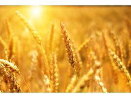 Pedro Barato : Los ecoesquemas tienen que recoger la diversidad agraria en España