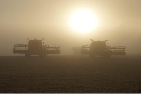 Periodo transitorio PAC: «Aceleramos la convergencia entre agricultores porque lo pide Europa, pero se hará de forma gradual».