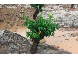 Plantean que las ayudas de Castilla y León a las pólizas de seguros agrarios se hagan por DNI y no por póliza contratada.