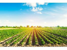 Propuesta para que Agroseguro compense hasta el 70% de la producción que no se pudiera recoger por casos de Covid-19