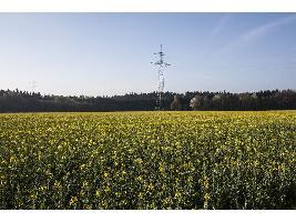 Un 7% de grandes empresas agrarias obtienen ya el 42% del valor de la producción que se genera en el campo español