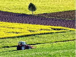 Un agricultor ilerdense defenderá los intereses de los 120.000 productores europeos de forraje