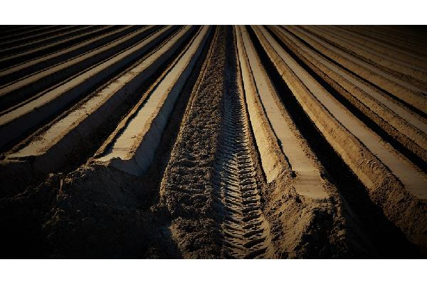 Un total de 176 jóvenes agricultores murcianos se benefician de 5 millones en ayudas para creación de empresas agrarias.
