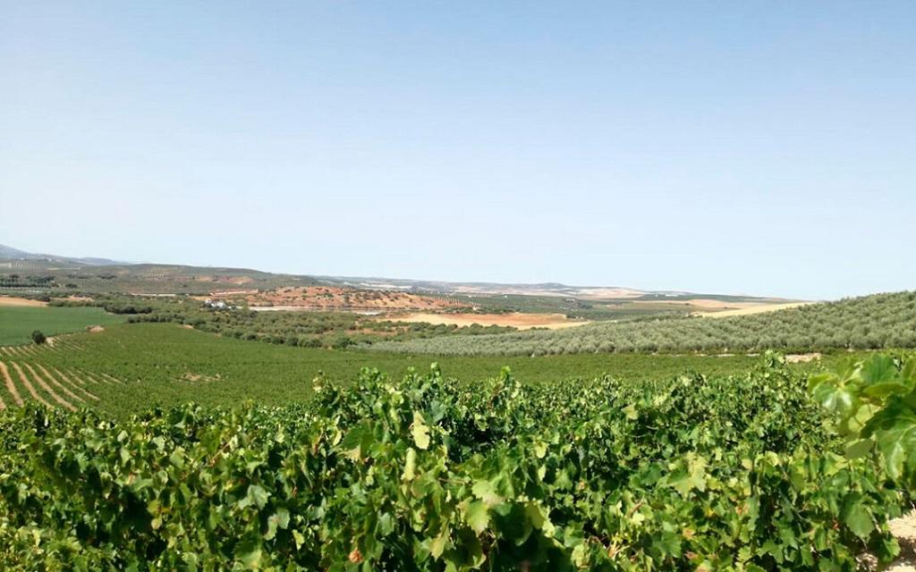 Detectan que los viñedos rodeados de hábitats naturales pueden reducir hasta cuatro veces los brotes de plagas