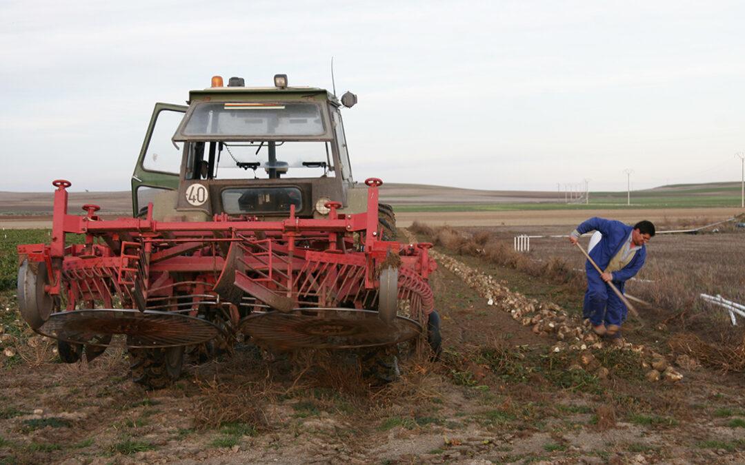 Solicitudes de la PAC: Los grandes cultivos evolucionan, con menos remolacha, trigo blando o alfalfa y más avena o colza - 0