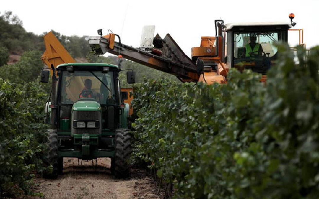 Unas cosechas en verde más rentables que otras: En CLM se paga a 1.938 €/ha; en zonas de CyL, a 4.700 €/ha; en Badajoz a 748 €/ha - 0