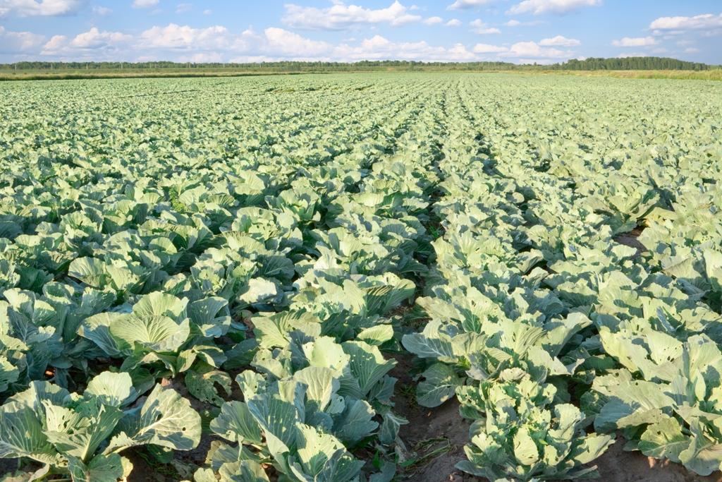 Autorizada la concesión de ayudas a inversiones materiales e inmateriales en transformación, comercialización y desarrollo de productos agrarios para 2019 y 2020 - 0