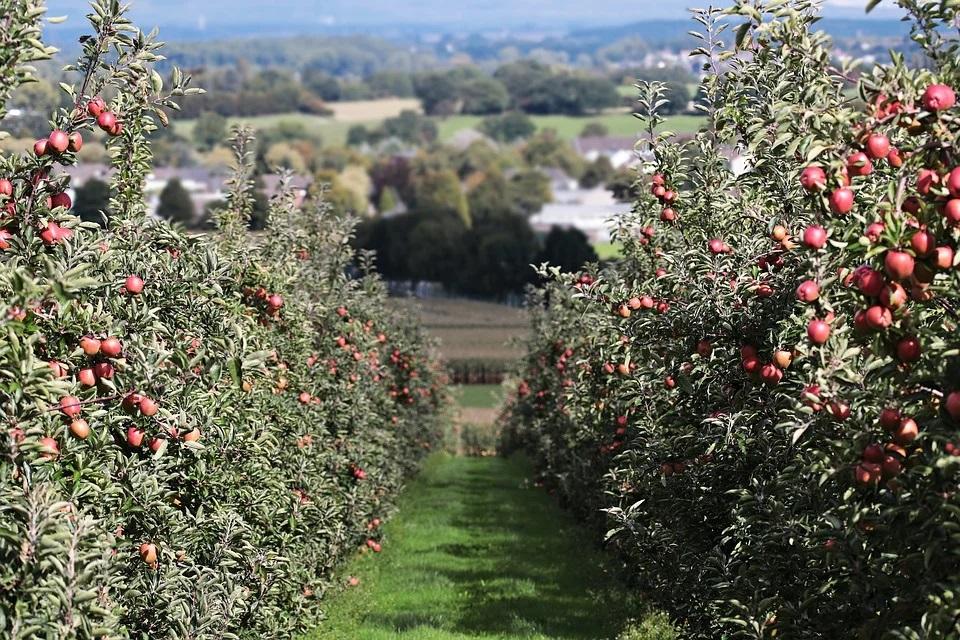 Agroseguro abona 132,4 Mll de € a fruticultores asegurados em 2020.