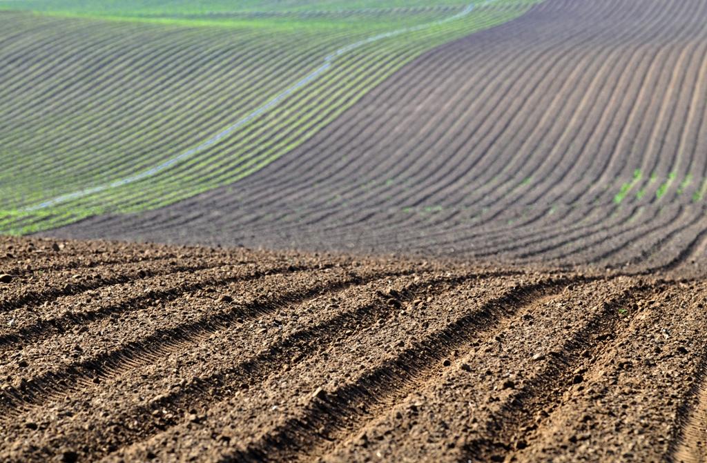 Ampliado el plazo para solicitar ayudas de financiación a titulares de explotaciones agrarias afectadas por la sequía y otras situaciones excepcionales - 0