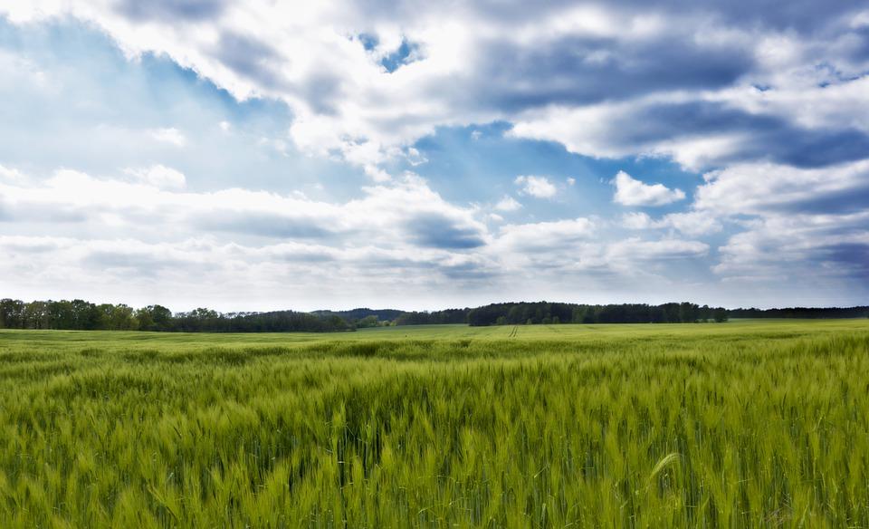 Aprobadas ayudas de hasta 70.000 euros a jóvenes agricultores para contratación, invernaderos o granjas de ganadería.