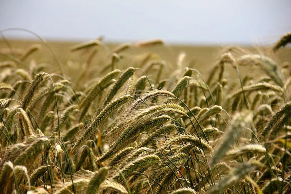 Aragón convoca la línea de apoyo a acciones de cooperación para la innovación tecnológica en el sector agroalimentario. - 0
