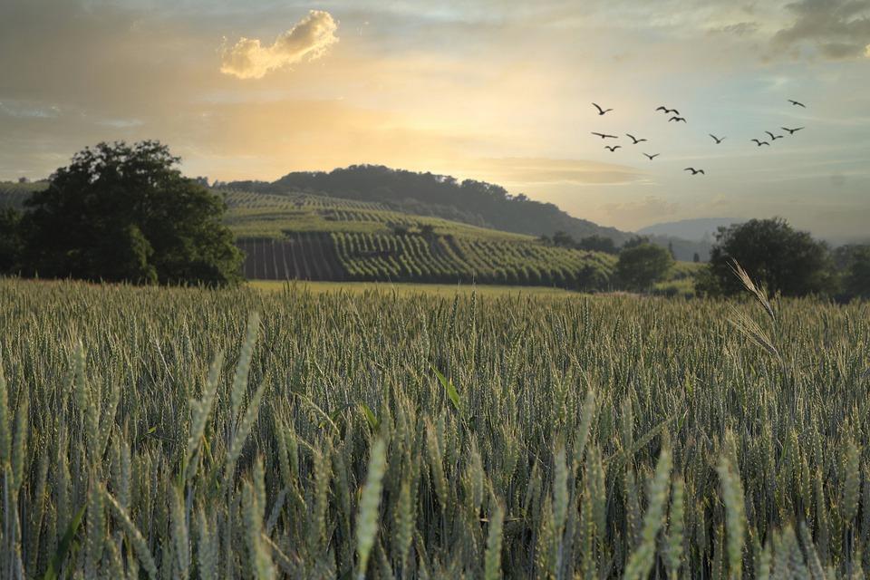 Arranque del curso agrario: UPA se centrará en el acuerdo de los ecoesquemas de la PAC y en la reforma de la Ley de la Cadena - 0