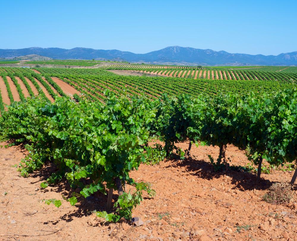Cariñena crea una colección de vinos con fines solidarios