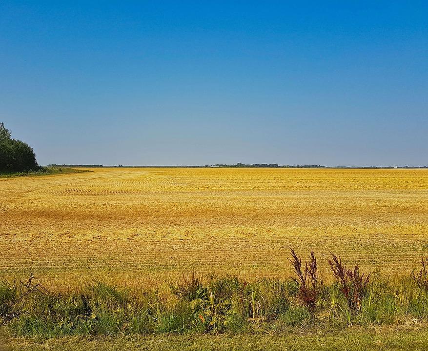 Castilla y León reitera ante el Ministerio de Agricultura que el Agricultor Profesional tiene que ser el protagonista fundamental del Plan Estratégico de la PAC - 0