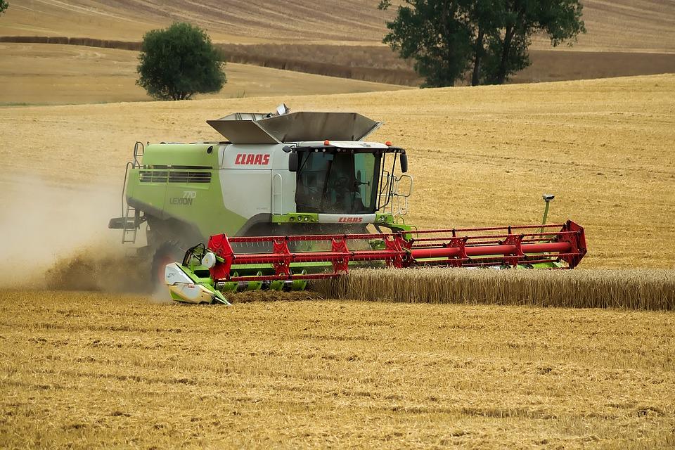 Cooperativas estima una gran cosecha nacional de cereales con 24,47 millones de toneladas, por encima de la primera estimación