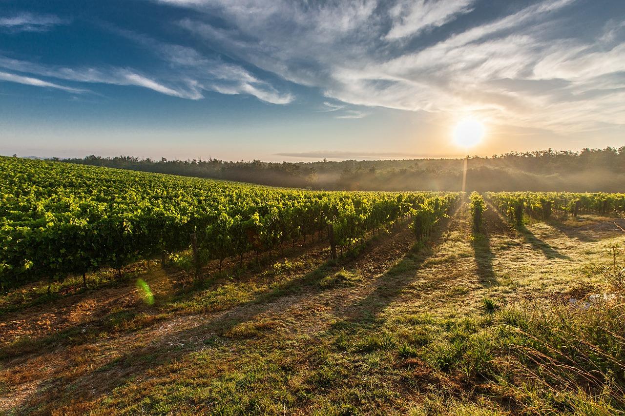 El 96 % de la superficie de viñedo en España está en territorio de alguna denominación de calidad - 0