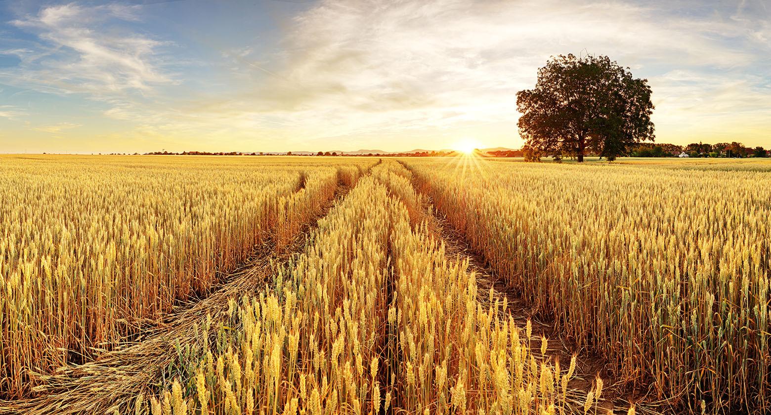El Consejo de Ministros aprueba el reparto de 130,7 millones de euros entre las CCAA para programas agrícolas, ganaderos y de desarrollo rural - 0