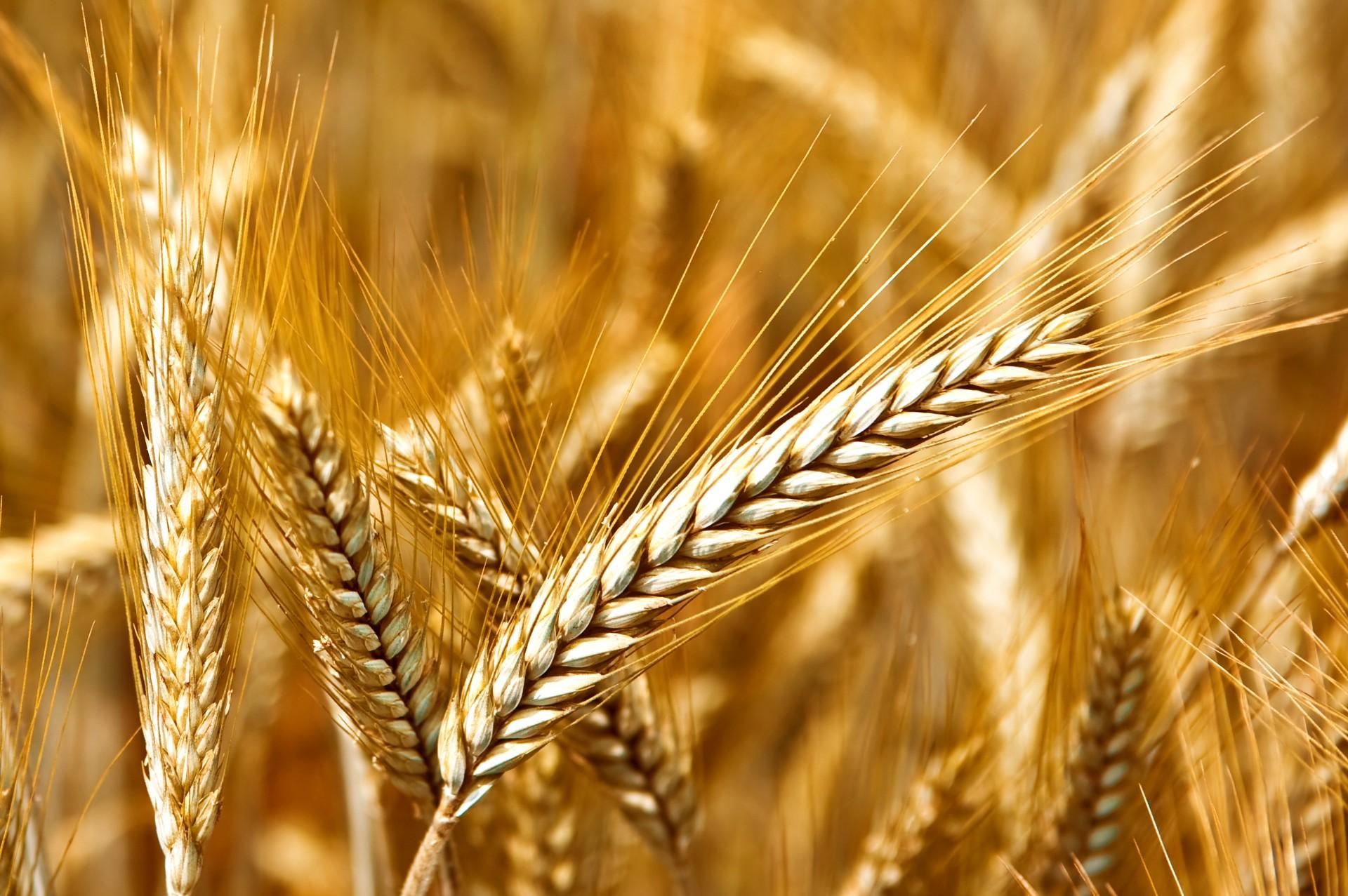 El Gobierno modifica las condiciones para reconocer lonjas agropecuarias de referencia - 0
