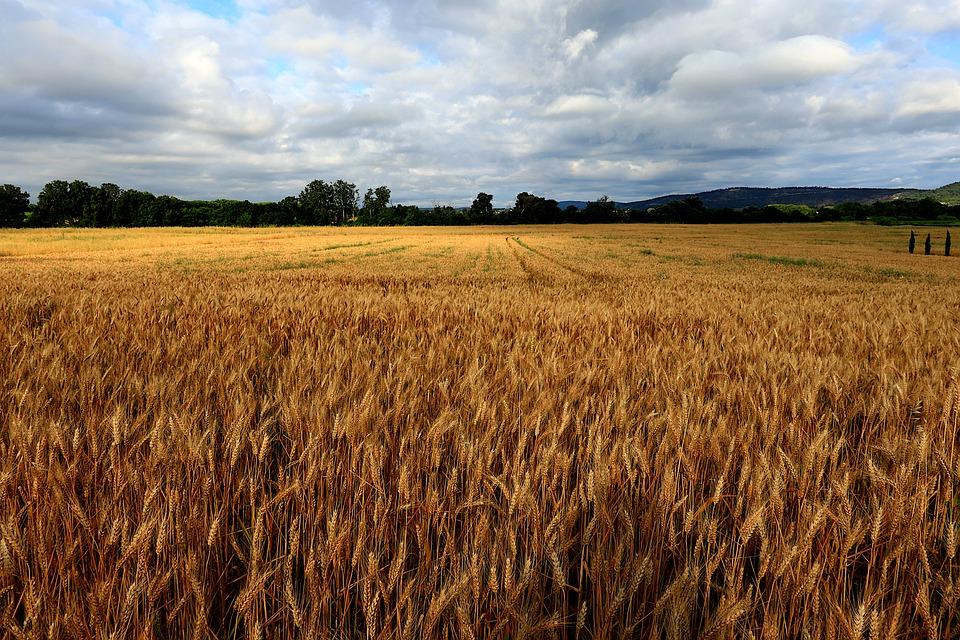 El mercado cerealista continúa tranquilo sin grandes cambios ni operaciones de grandes volúmenes en la lonja del Ebro - 0