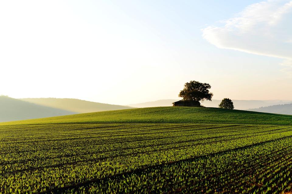 El Ministerio de Agricultura, Pesca y Alimentación abre el plazo para solicitar las subvenciones a explotaciones de titularidad compartida
