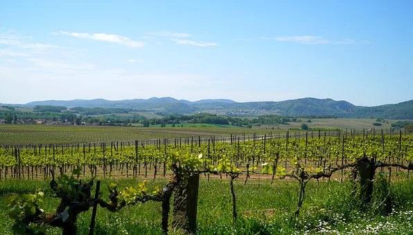 El Parlamento Europeo aprueba prolongar las medidas de apoyo por covid al sector del vino en 2021. - 0