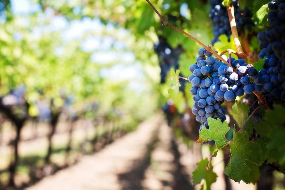 El sector vitivinícola cuida del medio ambiente a través de la innovación y sostenibilidad - 0