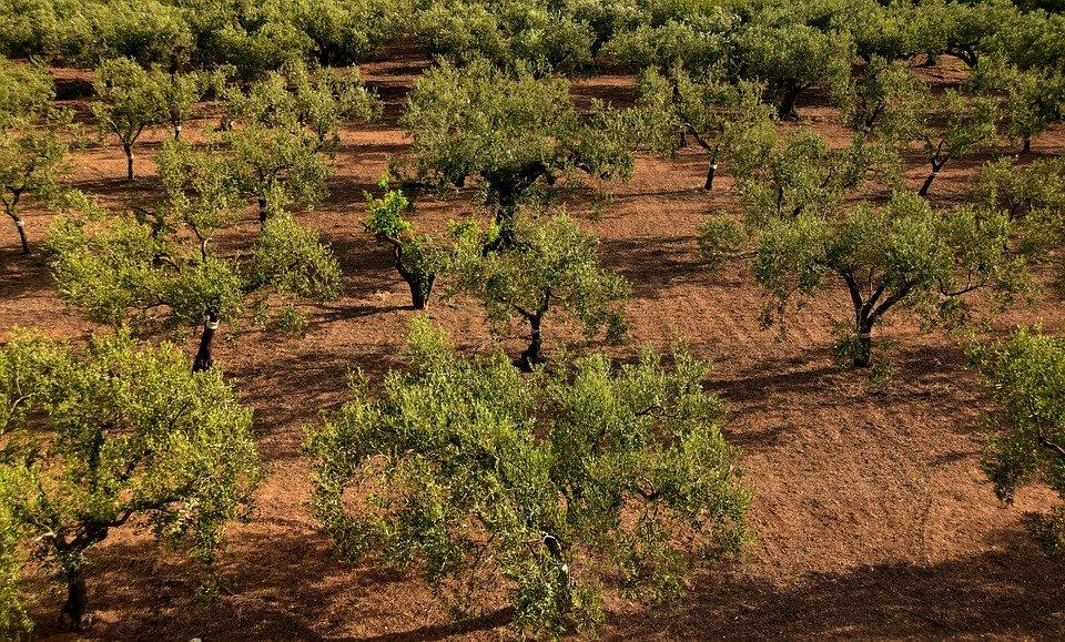 España aumenta su producción más que su superficie agraria - 0