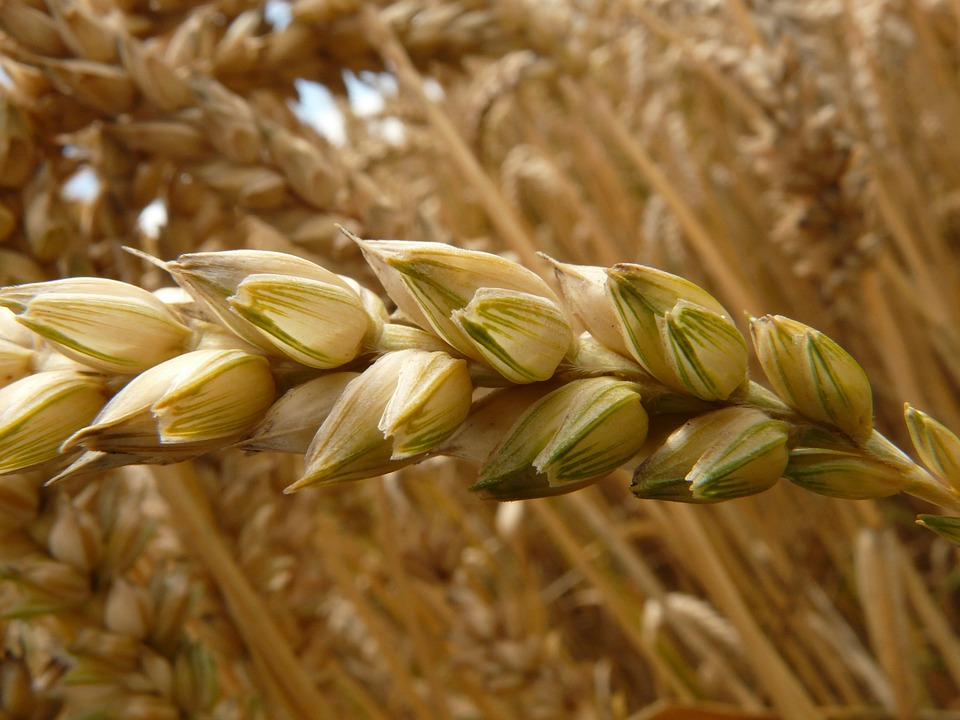 Hacienda mantendrá sin cambios el Régimen de Módulos para el sector agrario en 2021 en la declaración de la Renta