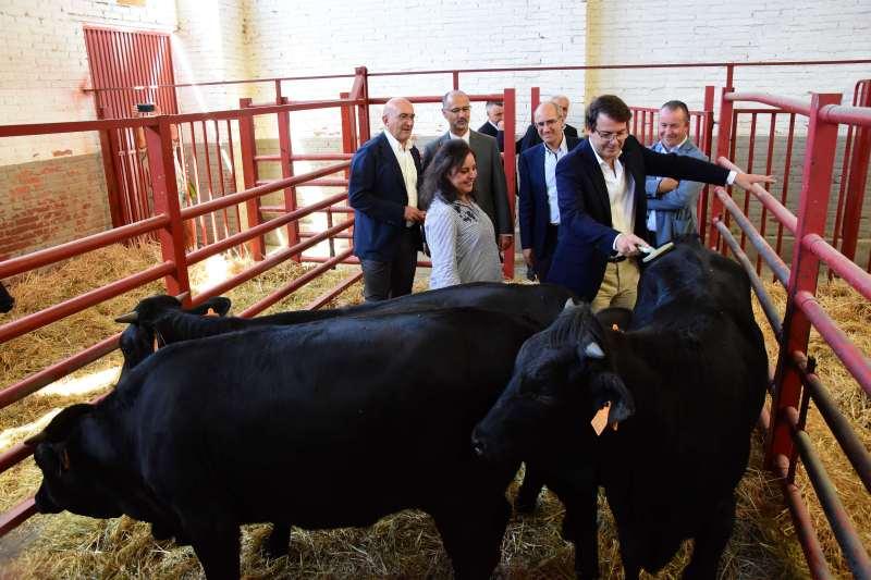 Inaguración de la Feria del Sector Agropecuario y la 31 Exposición Internacional de Ganado Puro, Salamaq 19 - 3