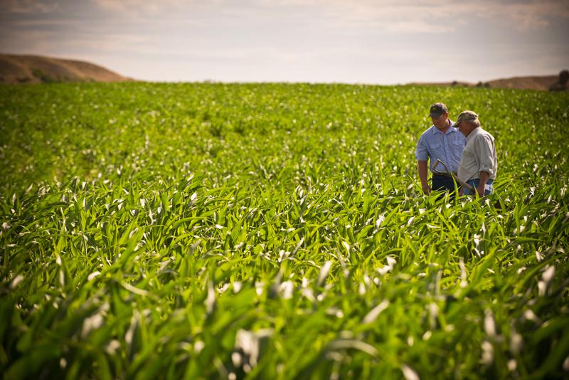 Investigadores del CSIC desarrollan un sistema estadístico para el análisis de cultivos